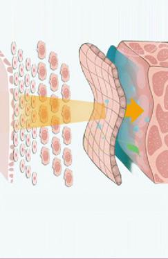 皮肤层次图片素材